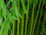 """Наполнитель """"Бамбуковое волокно"""""""